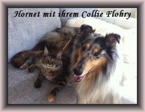 6_monate_collie